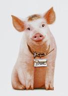 Babe: Pig in the City - Key art (xs thumbnail)