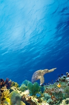 Coral Reef Adventure - Key art (xs thumbnail)