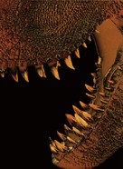 Jurassic Park - Key art (xs thumbnail)