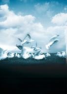 Jonathan Livingston Seagull - Key art (xs thumbnail)