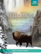 """Yellowstone"" - DVD movie cover (xs thumbnail)"