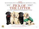 Pick of the Litter - British Movie Poster (xs thumbnail)