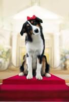 Show Dogs - Key art (xs thumbnail)