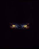 Anaconda - Key art (xs thumbnail)