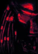 Predator 2 - Key art (xs thumbnail)