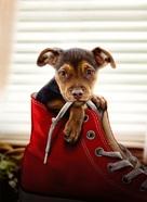 A Dog's Way Home - Key art (xs thumbnail)