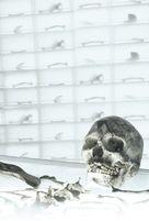 """""""Bones"""" - Key art (xs thumbnail)"""
